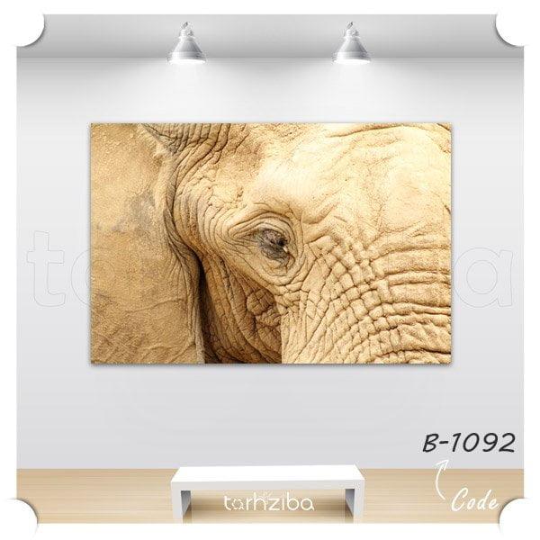 خرید تابلو پرتره فیل پیر