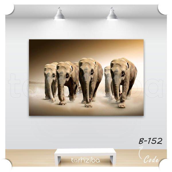 تابلو عکس هجوم فیل ها