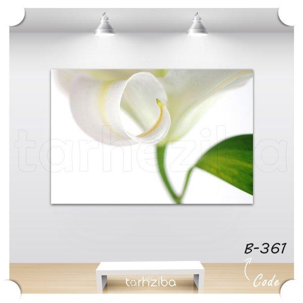 تابلو عکس گلبرگ سفید