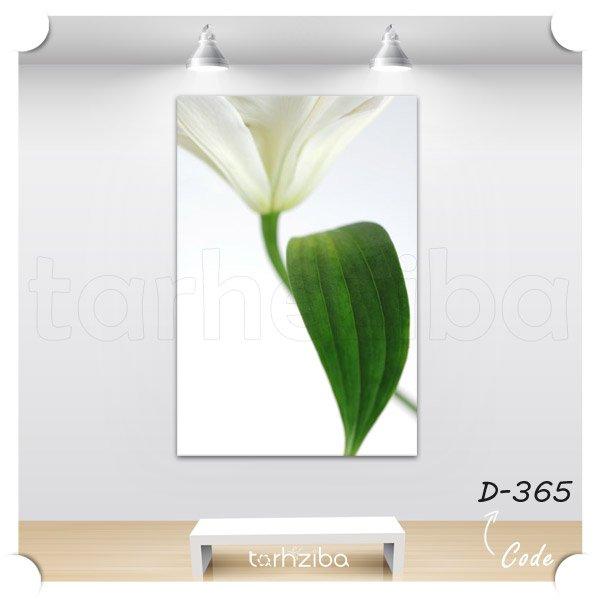 تابلو عکس گل سفید