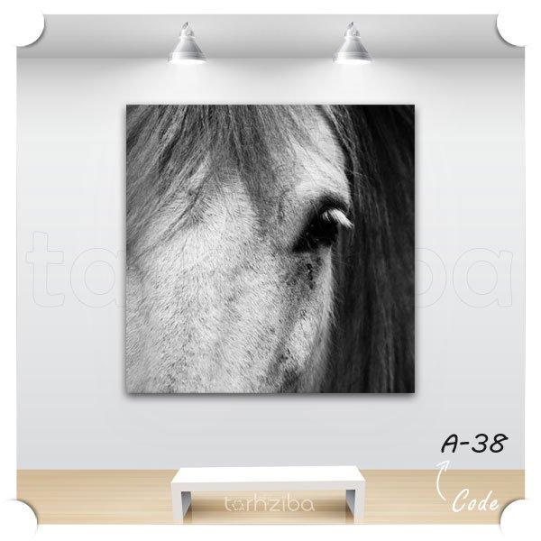 تابلو پرتره اسب زیبا