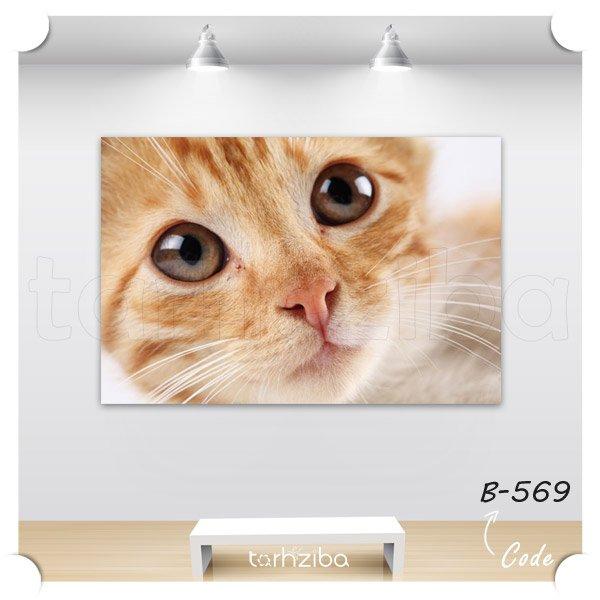 تابلو عکس پرتره گربه ای