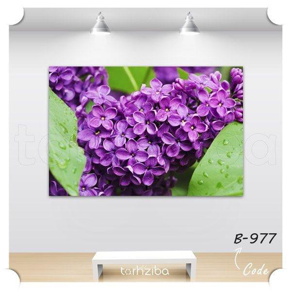 خرید تابلو عکس گل میخک بنفش